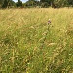 meadow-web