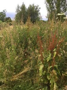 meadow-web2